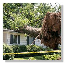 Wind-Damage-Leads