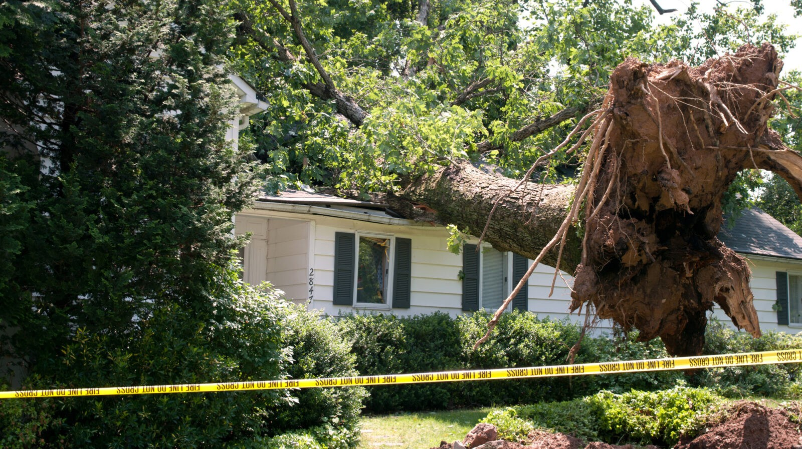 Leads Wind Damage Specialists